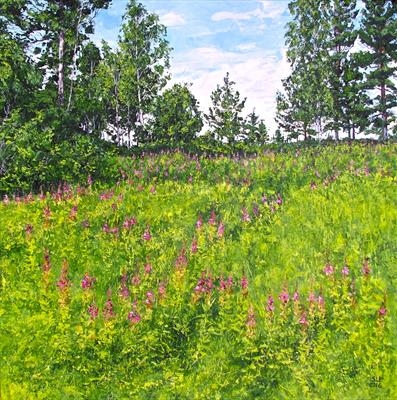 Fireweed Behind My House