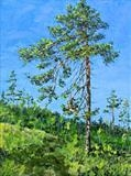 Study of a pine tree (1) by Steen Lersten Petterson, Painting, Oil on canvas