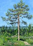 Study of a pine tree (2) by Steen Lersten Petterson, Painting, Oil on canvas