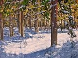 Winter Spruce by Steen Lersten Petterson, Painting, Oil on canvas